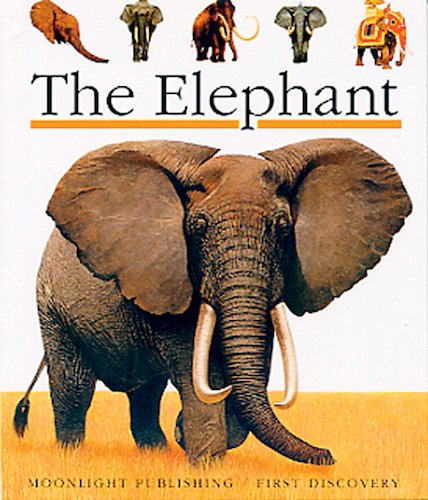 First Discovery: The Elephant