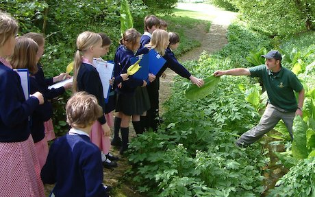 Children learning about plants
