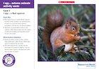 I spy… autumn animal activity cards