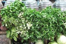 Hierbas alimenticias, hierbas comestibles, perejil