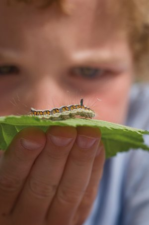 Boy and catterpillar