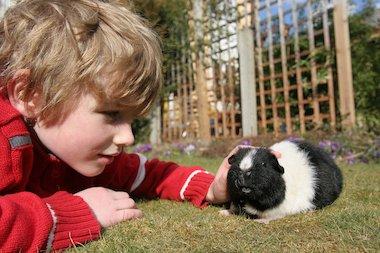 Boy and guinea pig