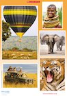On safari – poster