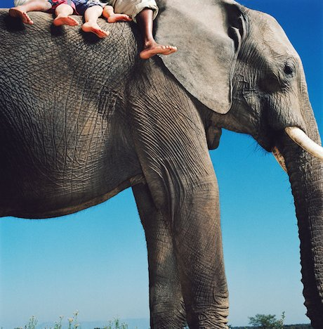 Elephant © Tim Flach/ www.gettyimages.com