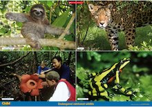 Endangered rainforest wildlife