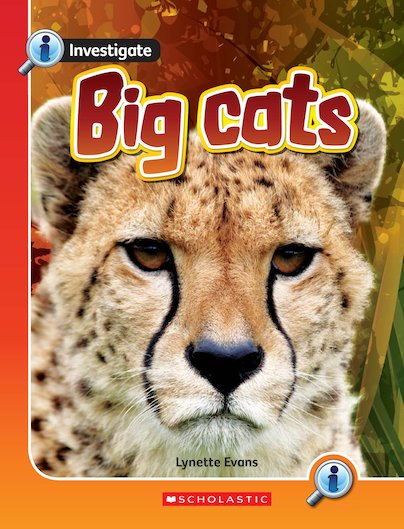 Investigate: Big Cats x 6