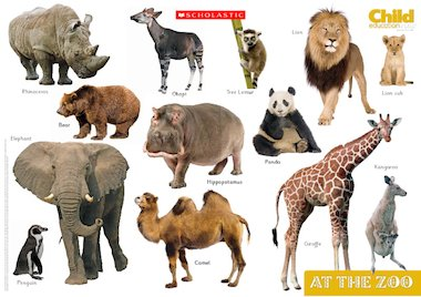 Animals Pictures Pdf
