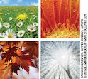 Bank of images representing the seasons
