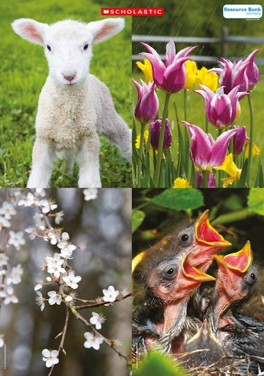 Signs Of Spring Primary Ks1 Teaching Resource Scholastic