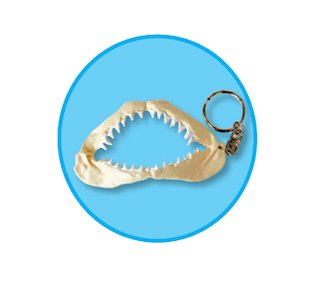 FREE Shark jaw keyring