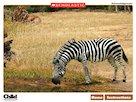Life through a lens: African savannah