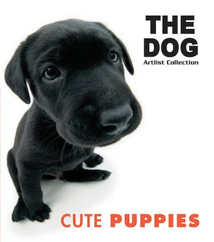 The Dog: Cute Puppies