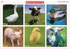 Farm-animal sounds – interactive game