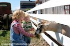 Children feeding goat