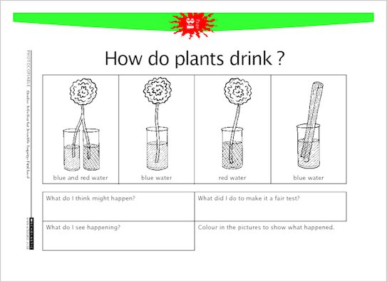 How do plants drink?