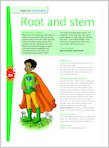 Root and stem (1 page)