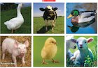 Farm animals – poster