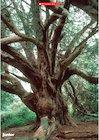 Tree photo poster