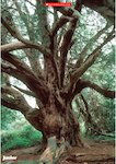 Tree photo poster (1 page)