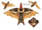 Paper model animals: Fruit bat (2 pages)