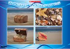 Ocean treasures – poster