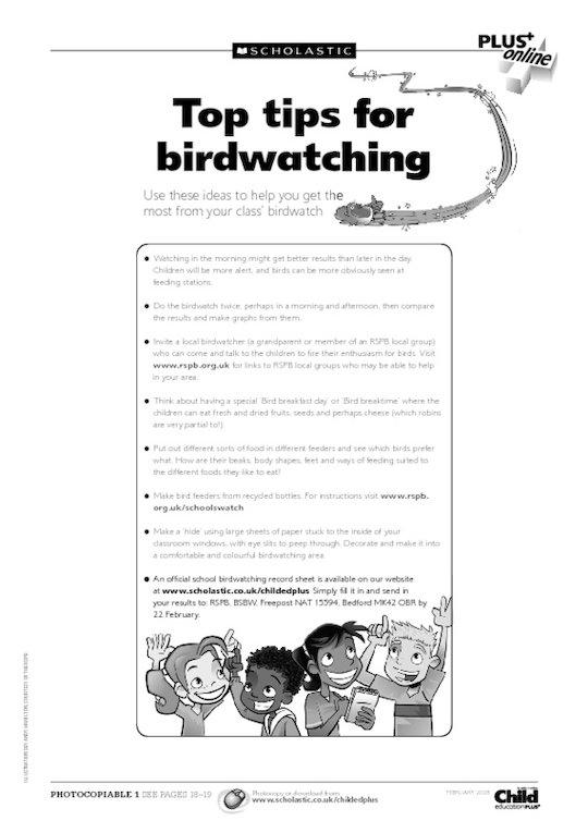 British birds activities