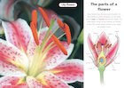 Parts of a flower – poster
