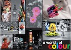 A world of colour