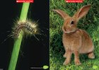Caterpillar and rabbit poster