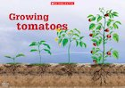 Growing tomatoes poster