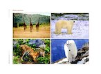 Wild animals - poster (1 page)