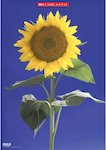Sunflower image (1 page)