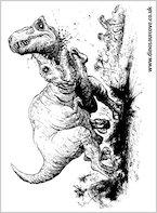 Battling Tyrannosaurs!