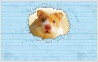 Humphrey wallpaper