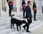 Nemo et Emmanuel Macron