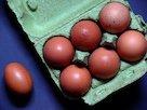 egg-1803348_640.jpg