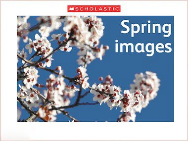 Spring Image Slideshow Primary Ks1 Ks2 Teaching Resource
