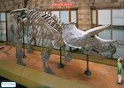 Dinosaur skeleton poster