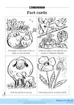 Fact cards: Plants and animals 2 (1 page)