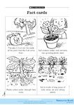Facts cards: Plants and animals 1 (1 page)