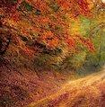 autumn winter.jpg