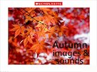 Autumn images and sounds slideshow