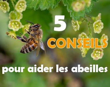 Conseils pour aider les abeilles