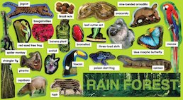 Rainforest Plants and Animals Mini Bulletin Board