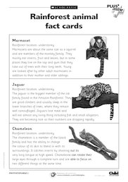 Rainforest fact cards