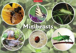 Minibeasts - poster