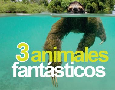 ¡Al rescate de tres animales fantásticos!