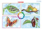 Life cycle of a butterfly – poster