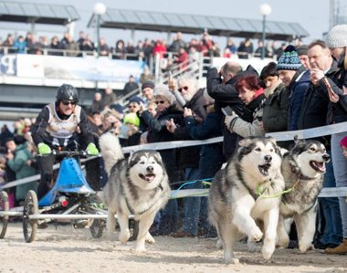 Husky-Rennen im Sand