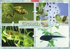 Growth – poster